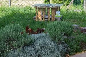 nos poules!